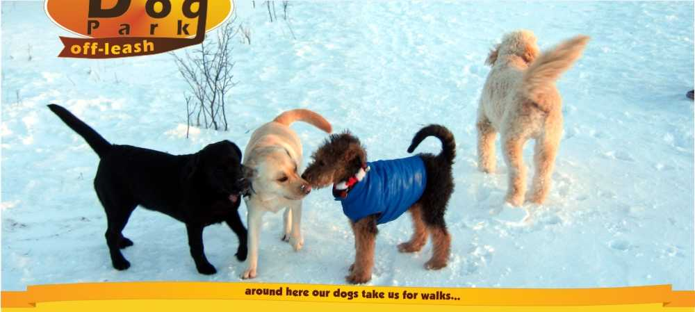 Welcome to the informal Stittsville off-leash Dog Park